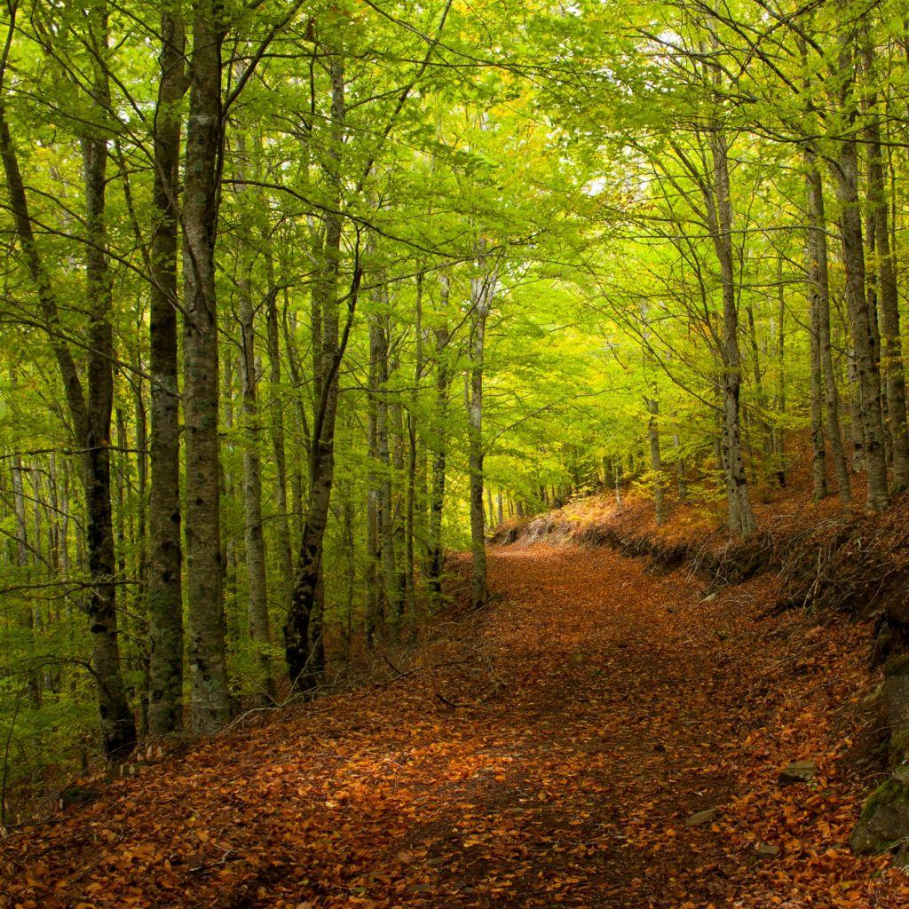 05 Bosque Faias S Lourenço (7)