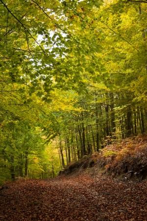 Bosque de S. Lourenço